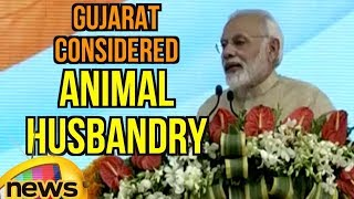 Gujarat is a state which has considered animal husbandry PM Modi | Mango News - MANGONEWS