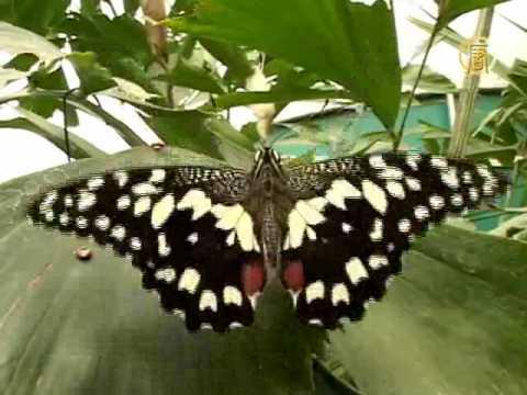 Выставка бабочек в музее естествознания Лондона…