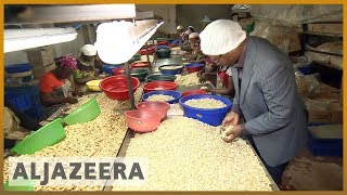 🇹🇿Tanzanian government buys entire cashew crop to end price dispute l Al Jazeera English - ALJAZEERAENGLISH