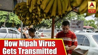 Know how Nipah Virus gets transmitted and its prevention - ABPNEWSTV