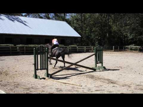 Horse Jumping in Slow Motion - Twixtor FCP X