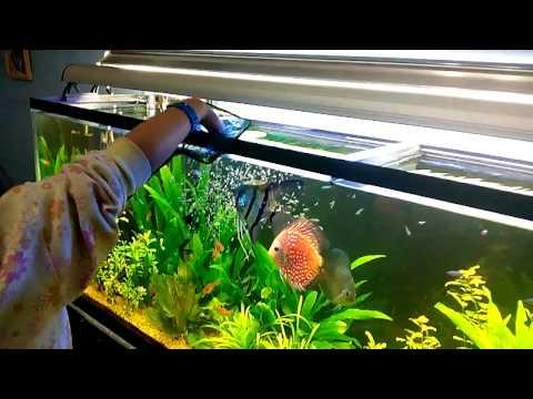 Acuario peces disco