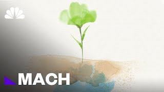 Keeping Earth Alive: How Photosynthesis Is Essential To Our Survival | Mach | NBC News - NBCNEWS