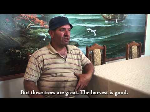 Armenia Tree Project-ի եւ Արցախում հաստատված սիրիահայերի հրաշալի գործակցությունը