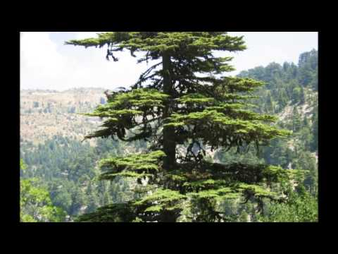 Samy Hawat - Moon of Ehden - سامي حولط - قمر اهدن - Kamar Ehden