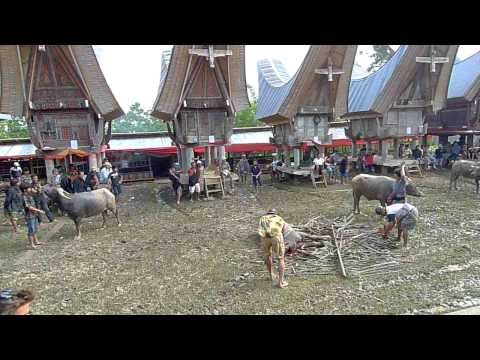 Indonesia - Toraja funeral 3