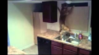 El increíble escape de un perro encerrado en la cocina de s
