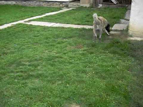 Qeni i Sharrit(Sharki)