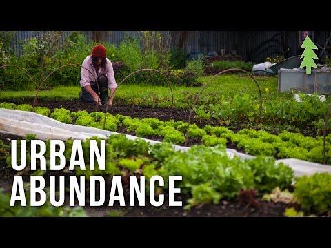 1/2-Acre Urban Property Transformed into Organic Veggie Gardens - Urban Abundance