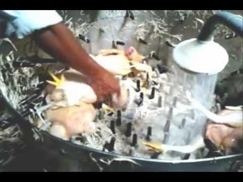 peladora de pollos 1000 / hora. inoxidables cordova..wmv