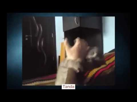 Video Kucing Lucu - Lucu Cat Video Ever- Funny Video - Binatang Lucu Video Hewan Lucu [ 1 ]