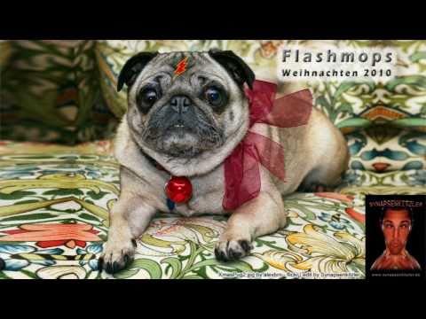 Flashmops Hund bellt Frazy Weihnachtslied Photo