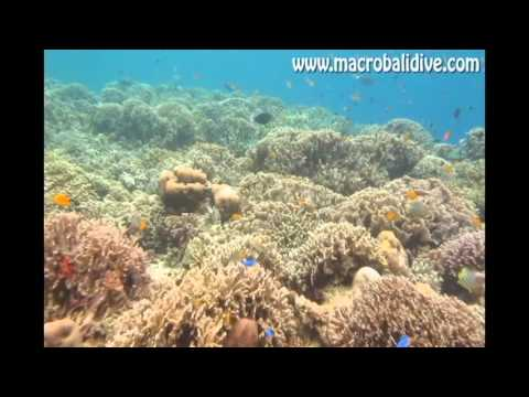 Macro Bali Dive Center 2014