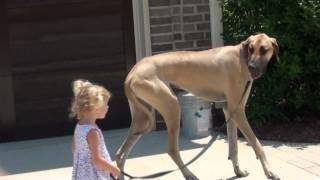 散歩に出る犬の映像なんだが足が長すぎる。厩舎から出てきた馬みたい