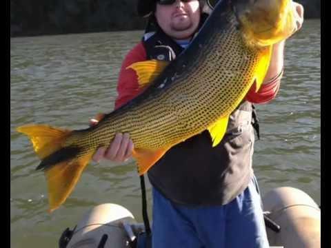 Pesca Dourado Rio Uruguai 14 07 12