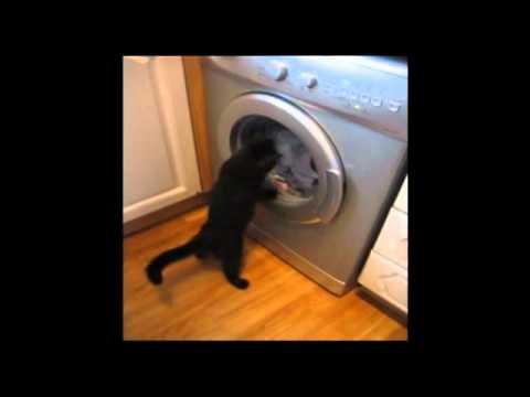 Bez kota nie ma prania