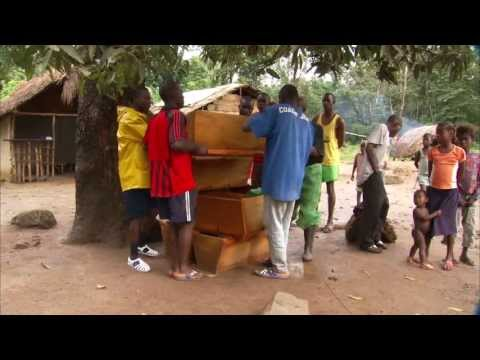 Beekeeping Benefits Liberia (UMTV)