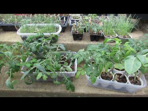 The Acclimation or 'Hardening-off' Process for Vegetable Seed Starts: The Indoor/Outdoor Method