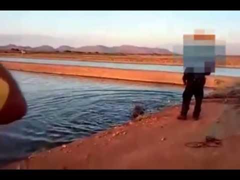 Policías municipales matan a cocodrilo de Ahome