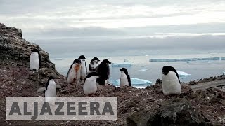 Antarctica penguins move south in search of cold - ALJAZEERAENGLISH