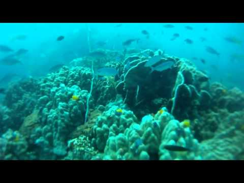 Scuba Diving - Underwater Fish 1