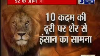10 कदम की दूरी पर शेर से इंसान का सामना - ITVNEWSINDIA