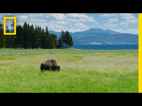Spend a Relaxing Hour in Yellowstone's Beautiful Landscapes | National Geographic