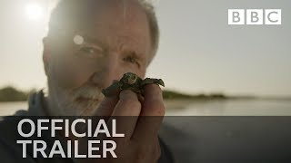 Nature's Turtle Nursery: Inside the Nest | Trailer - BBC Four - BBC
