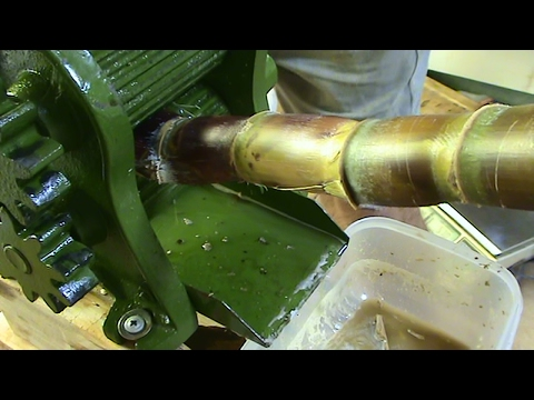 Juicing My Sugar Cane By Hand.