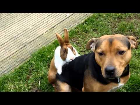 FUNNY Rabbit Shagging a Dog in Garden