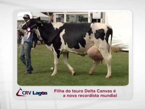 Notícia CRV Lagoa - Filha de Delta Canvas recordista mundial Girolando - 2014