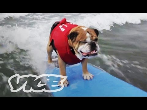 Cute Surfing Dogs