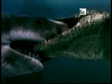 Duelo Animal Cocodrilo marino vs Gran tiburón blanco ( Audio Latino )  ( HQ )