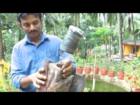 Stingless Bees / Meliponiculture Part 3 - How to split a Colony of Stingless Bees & A Swarm!