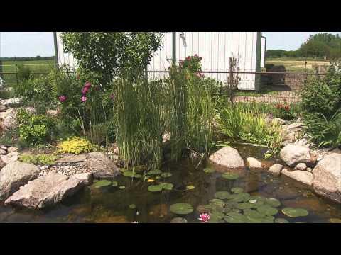 Gardening Tips: Best Plants for a Water Garden