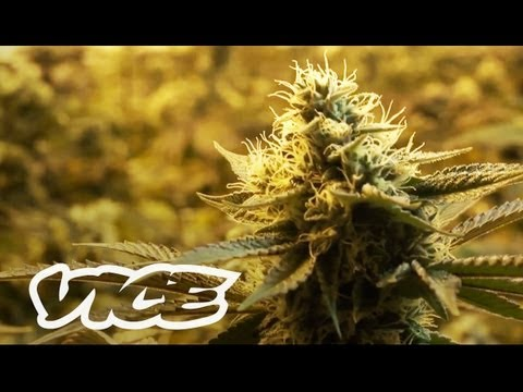 Canada's War on Weed 2013 documentary movie, default video feature image, click play to watch stream online