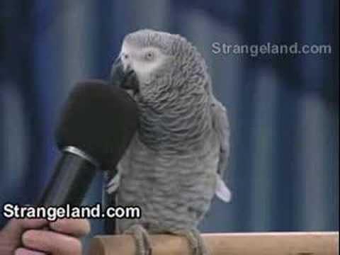 Papagaj Ajnstajn