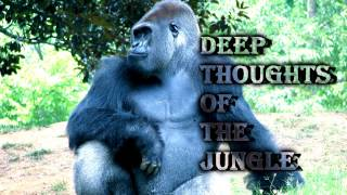 Royalty FreeBackground:Deep Thoughts of the Jungle