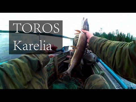 ловить торос