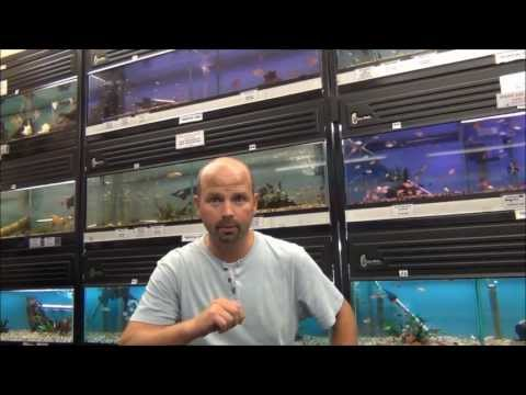 TYNE VALLEY AQUATICS STOCK UPDATE AUGUST 2013 - QUICK SHOP TOUR