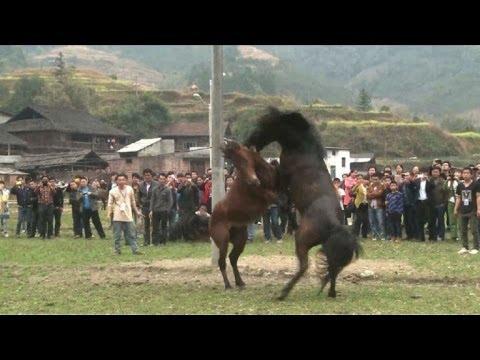 Sangrientos combates de caballos en China