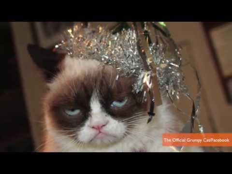 Watch Grumpy Cat Scores Movie Deal