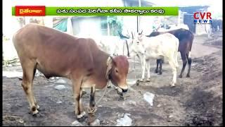 పశువుల ఆర్యోగ్యం పై అన్నదాతల ఆందోళన | Officers Neglect on Cattle Health in Adilabad | రైతే రాజు |CVR - CVRNEWSOFFICIAL