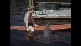 54 Flipper und der Inspektor