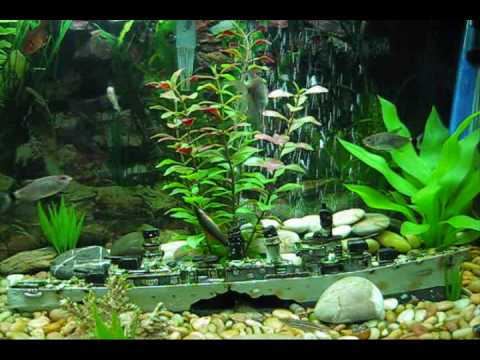 Community Fish Tank: 20 Gallon Fresh Water Aquarium