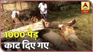 Odisha: 1000 trees chopped down for helipad - ABPNEWSTV