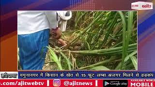 video : यमुनानगर में किसान के खेत से 15 फुट लम्बा अजगर मिलने से हड़कंप