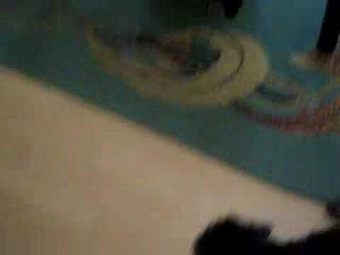 Walka psów:) Malutki York ze zwykłym mieszańcem:) Musisz zob