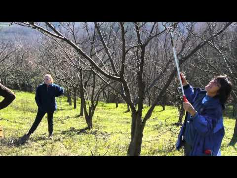 Učenje obrezovanja sadnega drevja