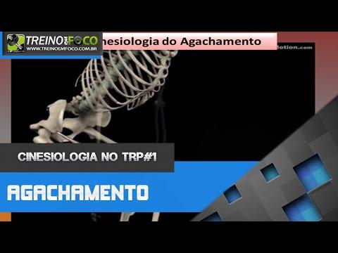 Análise Cinesiologica do Agachamento - Cinesiologia no TRP #1
